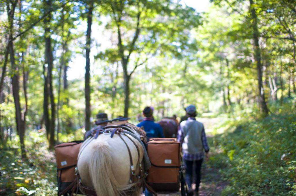 馬と共にアファンの森を散策